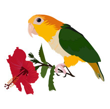 Parrot Holding A Hibiscus Flow...