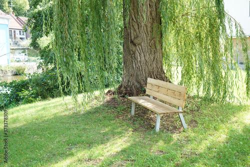 Fototapeta Wooden bench by a willow tree obraz