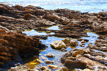 Tidal Pools In The Rocks At The Beach At Little Corona Beach In Newport Beach California