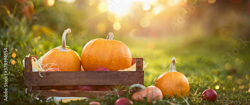 Autumn  Thanksgiving Day Background. Harvest - 378394554