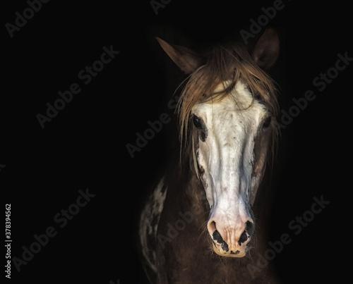 Cuadros en Lienzo portrait of a horse