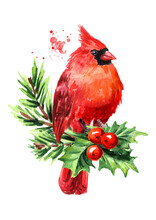 Red Bird Cardinal On The Fir  Branch And Holly Berries. Symbol Of Christmas, Watercolor Hand Drawn Illustration Isolated On White Background