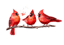 Red Birds Cardinal On The Branch. Watercolor Hand Drawn Illustration, Isolated On White Background