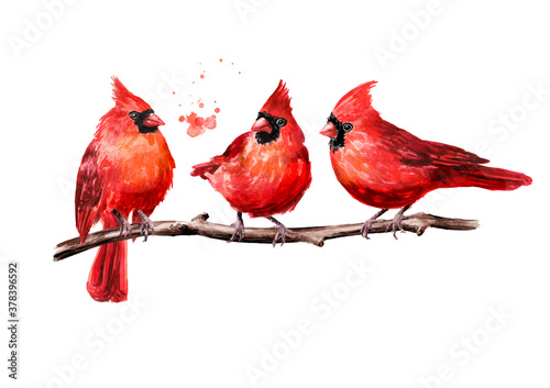 Canvas Print Red birds Cardinal on the branch