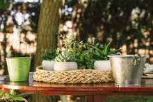 Close-up Of Potted Plants With...