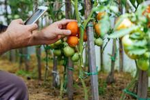 Farmer Taking Smartphone Pictu...