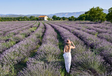 Mid Adult Woman Wearing White Dress And Hat Walking Amidst Lavender Field