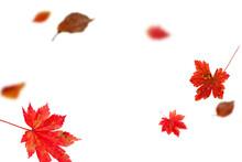Bright Autumn Falling Leaves O...