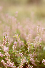 Wild Pink Forest Flowers