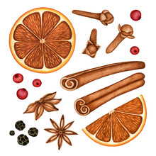 Christmas Hot Mulled Wine Spices Watercolor Set. Dried Orange Slices, Clove Buds, Anise Stars, Black Pepper, Cinnamon Sticks And Cranberries. Hand Drawn Clipart, Elements Isolated On White For Design
