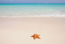 A Sea Star On The Edge Of The Ocean. Shot On The Beach In Playa Del Carmen, A Famous White Sand Beach - Mexico