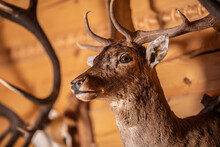 Wall-mounted Stuffed Deer In A Wooden Interior