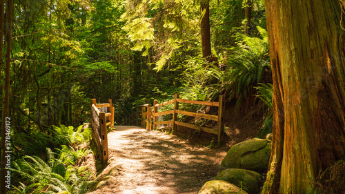 Photo Tree trunk and boulders at entrance to footbridge on Capilano Pacific Trail, BC