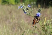 Upside Down Monarch Butterfly ...