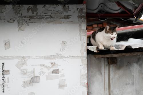 Foto stray cat sit at a street