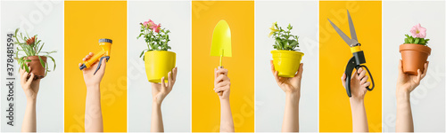 Female hands with gardening tools and houseplants on color background Fototapet