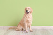 Cute dog with tooth brush near color wall