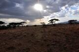 Fototapeta Sawanna - Wieczór w rezerwacie Buffalo Springs (Kenia)