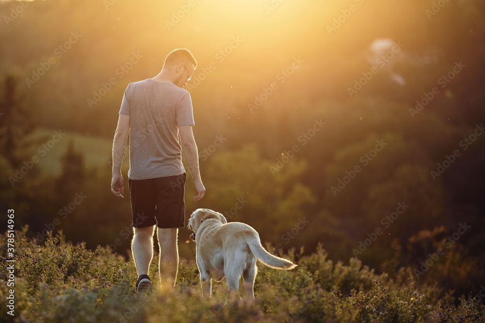 Fototapeta Man with dog walking on meadow at sunset