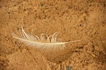 White Feather, Sea Sand, Bird Dropped