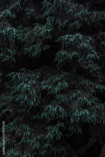 Vertical shot of tree leaves in a forest