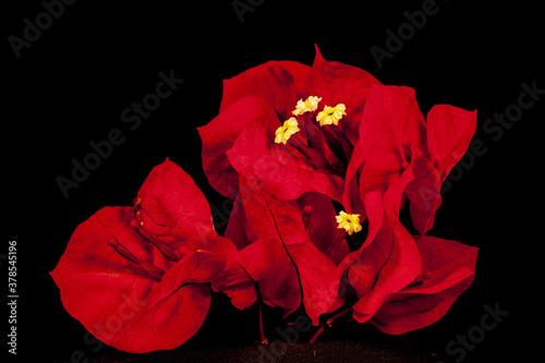Foto Flores silvestres.