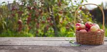 Apples In A Wicker Basket On A...