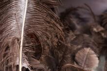 Ostrich Feathers Texture Backg...