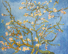 Blossoming Almond Tree. Beauti...