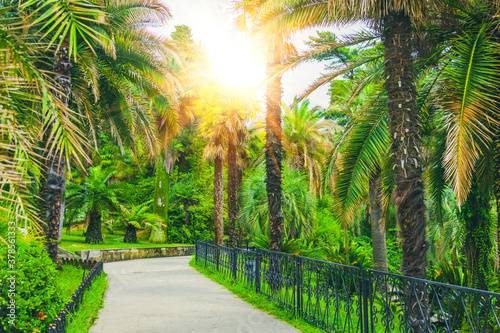 Fototapeta Walking path and alley of different palms in a tropical Mediterranean park. obraz