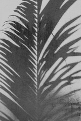 Tropikalne tło, cień palmy na jasnym tle, czarno białe.