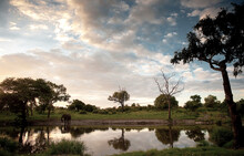 A Lone Elephant At A Watering Hole In The Pafuri Region