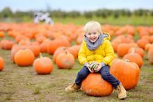 Little Boy On A Pumpkin Farm At Autumn. Preschooler Child A Sitting On Huge Pumpkin