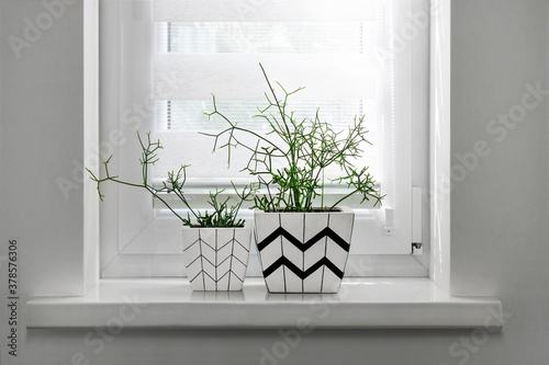 Stampa su Tela Two flower pots with geometric patterns with rhipsalis plants planted in them st
