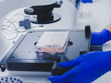 Human Cell Culture Plate Under...