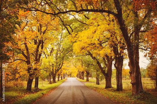Fotografia old asphalt road with beautiful trees in autumn