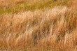 Dry grass and desert terrain. Natural landscape and grass field. Summer or autumn season. Freedom, nature view concept