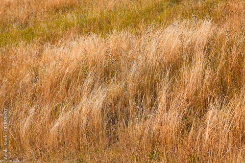 Valokuvatapetti Dry grass and desert terrain