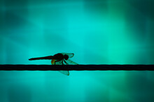 Dragonfly On The Wire