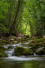 Small River In The Forest At The Bottom Of The Grand Canyon Of Crimea. Shallow Depth Of Field