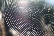 Transparent Web In Summer Morn...