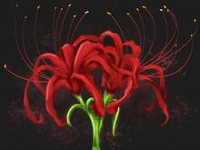 Illustration Of Flower Named R...