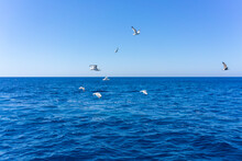 Scenic View Of Seagulls Above Aegean Sea Against Blue Sky. Santorini, Cyclades, Greece.