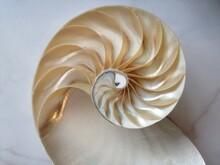 Shell Nautilus Fibonacci Section Spiral Pearl Symmetry Half Cross Golden Ratio Structure Growth Close Up Back Lit ( Pompilius Nautilus ) - Stock Photo Photograph Image, Picture