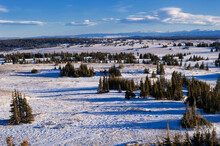 Snow Covered Libby Flats In The Snowy Range In Early Winter;  Wyoming