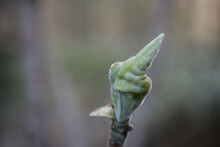Green Plant That Looks Like It Is Giving Middle Finger