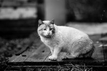 Big The Stray Cat Outdoors. Bl...