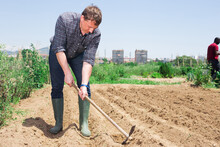 Tired Farmer Cultivates Garden...