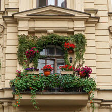 The Balcony Of The House Is Richly Decorated With Flowers And Climbing Plants.