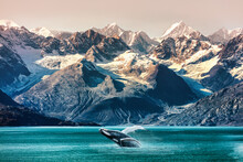 Alaska Whale Watching Boat Exc...